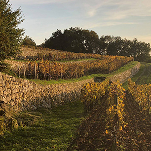 23/11/2018 - Autumn colours in our vineyards